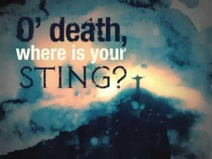 Where-is-Your-Sting-300x225