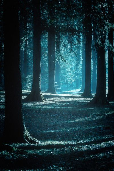 run into thwoods