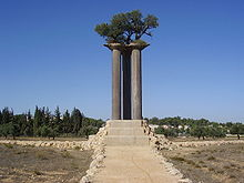 One of the awesome fascination of the the kibbutz at Ramat Rachel is the Olive Park which has three huge pillars and on the pillars are three Olive trees.