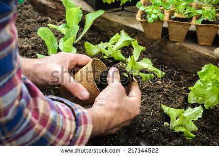 sfarmer plant